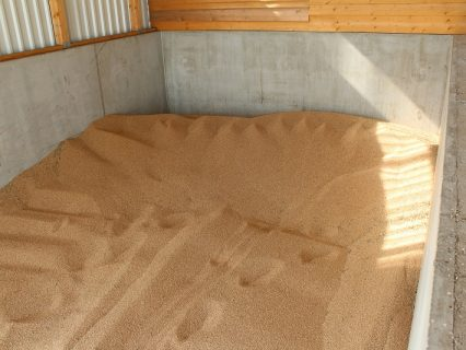Corn_maize_in_drying_bay_1