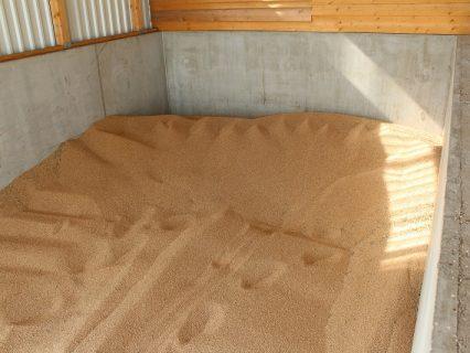 Corn_maize_in_drying_bay_1